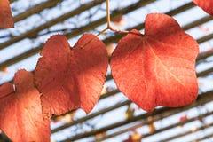 Autumn Time Kleurrijke tuin in Warshau De gouden poetsmiddelherfst royalty-vrije stock foto's