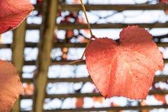 Autumn Time Kleurrijke tuin in Warshau De Poolse Herfst royalty-vrije stock fotografie