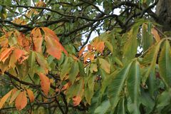 An autumn time. These are leaves that began to turn yellow in aun royalty free stock photos