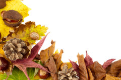Autumn time Stock Images