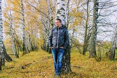 Autumn time: a man in blue jeans posing against the backdrop of an autumn birch forest Stock Images