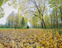Autumn time in the park of Olexandria stock photography