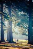Autumn time in Park Swierklaniec, Poland. Stock Photography