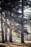 Autumn time in Park Swierklaniec, Poland. Royalty Free Stock Photo