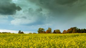Autumn time rapeseed field before rain royalty free stock images