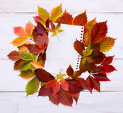 Autumn time: red grape leaves. Stock Photography