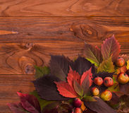 Autumn time: red vine leaves and wild apple. Royalty Free Stock Photography