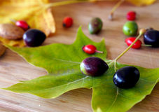 Autumn time in Spain: still life with maple leaf, olives and briar berries Stock Image