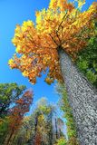 Autumn- A Time To Look Up. Royalty Free Stock Photography