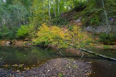 A tree fallen into a forest stream. Autumn time.n royalty free stock photos