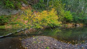 A tree fallen into a forest stream. Autumn time.n royalty free stock images