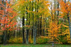 Autumn time trees Stock Photo