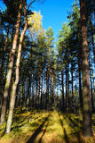 Autumn time in the woods Royalty Free Stock Photography