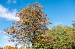 Autumn time of the year has arrived Royalty Free Stock Photography