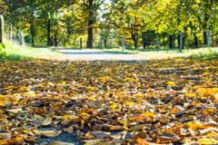 Autumn time of the year has arrived Stock Images