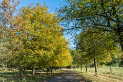 Autumn time of the year has arrived Royalty Free Stock Photo