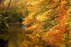 Autumn Tints Stock Photography