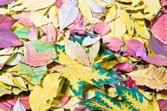 Autumn tints. In the garden Royalty Free Stock Photo