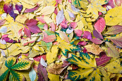 Autumn tints. Bright autumn colors Royalty Free Stock Photo