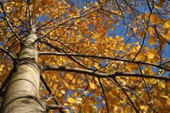 Autumn tints Stock Images