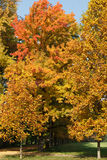 Autumn tints in Parco di Monza Royalty Free Stock Photos