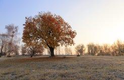 autumn to winter Stock Image