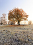 autumn to winter Royalty Free Stock Photography