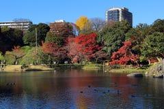 Autumn in Tokyo royalty free stock photo