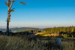 View of autumn mountain landscape. Sunset. Sunny natural scenery with solitary tree, grass, forest and mist on horizon. Hiking in tranquil evening nature stock images