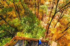 Autumn tower ascent Stock Images