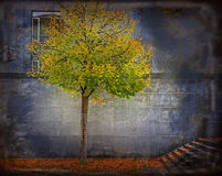 Autumn in town. A solitary tree among concrete and falling red leaves royalty free stock photo