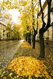 Autumn in town. (Gatchina, Russia Stock Images