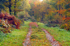 Autumn track Stock Photography
