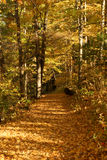 Autumn Trail. Leaf covered trail and a nice sunny day Royalty Free Stock Photo