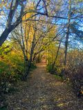 Autumn trail along the north Saskatchewan river in the Edmonton. River valley royalty free stock image