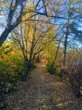 Autumn trail along the north Saskatchewan river in the Edmonton royalty free stock image