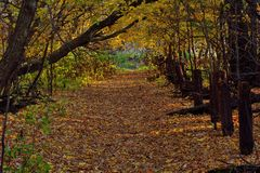 Autumn Trail Stock Photography
