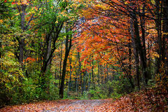 Autumn trail Stock Photos