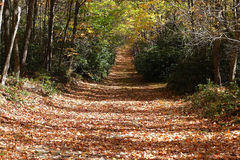 Autumn Trail Royalty Free Stock Photo