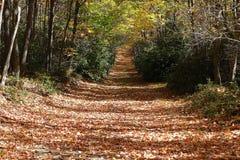 Autumn Trail Royalty Free Stock Photo