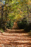 Autumn Trail Royalty Free Stock Images