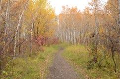 Autumn Trail colorido em um parque fotografia de stock