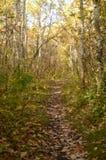 Autumn Trail colorido em um parque Imagens de Stock Royalty Free