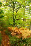 Autumn trail in a forest Royalty Free Stock Photo