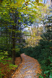 Autumn trail in forest Stock Image