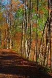 Autumn Hiking Trail Royalty Free Stock Photos