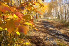 Autumn Trail in Minnesota royalty free stock photos