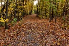 Autumn Trail na luz solar Imagem de Stock Royalty Free