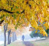 Autumn trail in park Stock Image