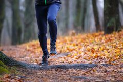 Autumn trail running background. royalty free stock photography